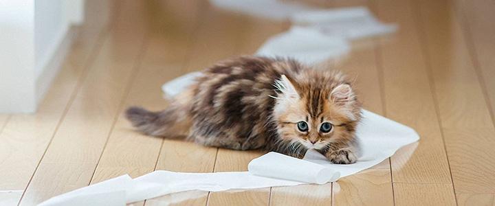 Запор у кота – причины
