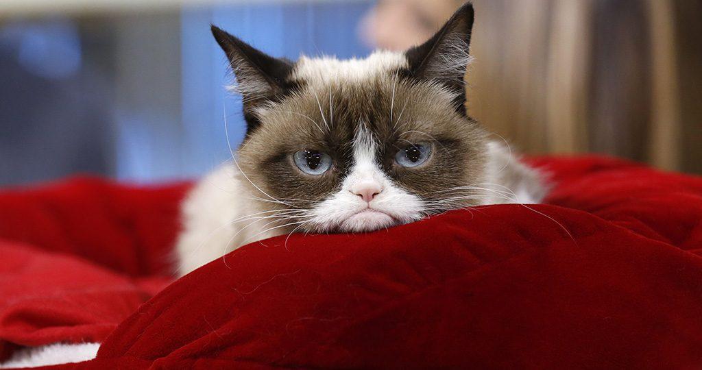 Запор у кота – что делать хозяину