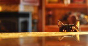 Как видят кошки в темноте и при свете – цвета, люди и мониторы
