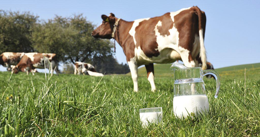 Корова дает мало молока – причины и лечение