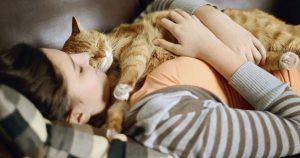 Можно ли котам спать с вами в одной кровати