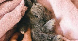 Кролик стучит задними лапами – причины и что делать