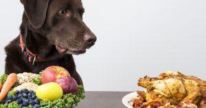 Панкреатит у собак – причины и лечение
