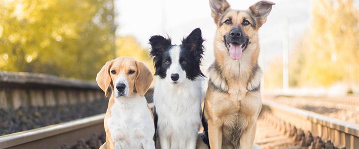 Пена изо рта у собак