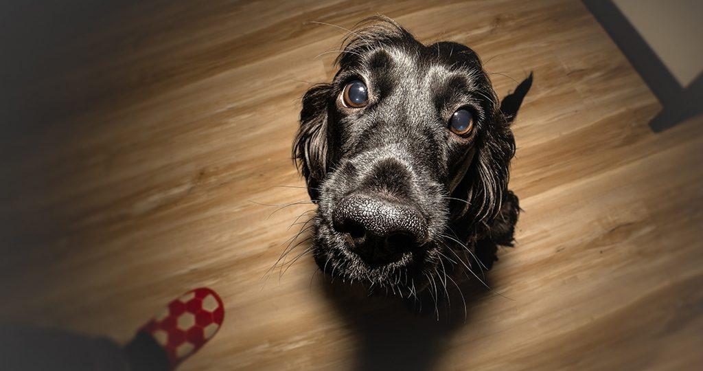Пена изо рта у собак – причины и нужно ли к ветеринару