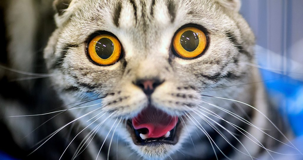 У кота кровь в моче – причины и лечение