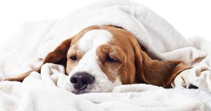 У собаки кал с кровью – причины и лечение