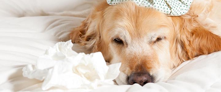Аллергия у собаки – как помочь