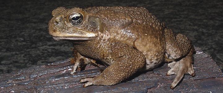 Чем отличаются лягушка и жаба