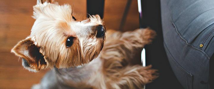 Сливочное масло собаке