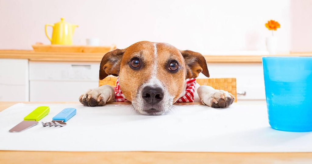 Сливочное масло для собак – можно ли давать и будет ли польза