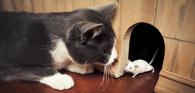 Кошка принесла мышь в дом