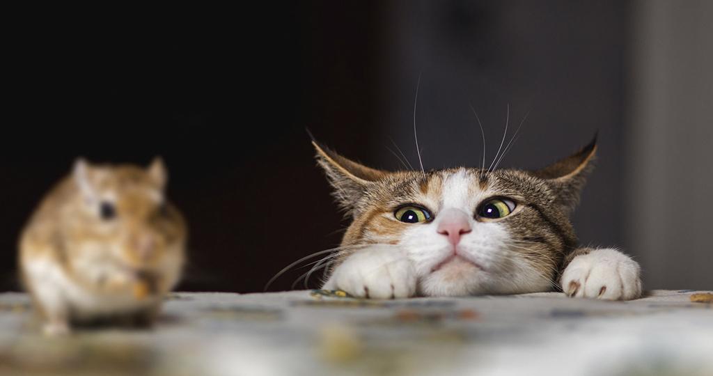 Кошка принесла в дом мышь – похвалить или наругать