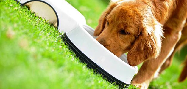 Польза круп для собак