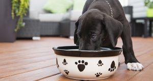 Крупы для собак – польза, вред и правила приготовления