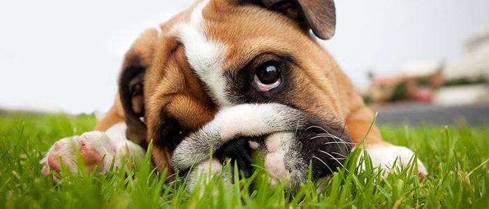 Собака ест землю из цветочного горшка