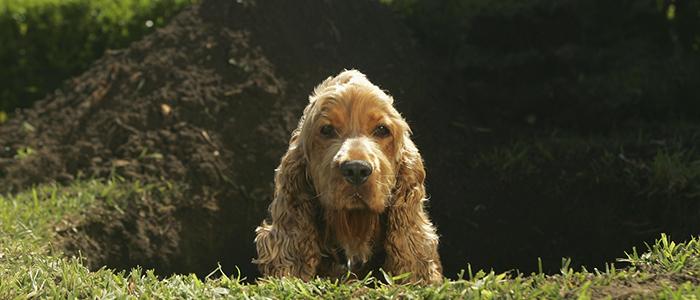 Почему собака ест землю