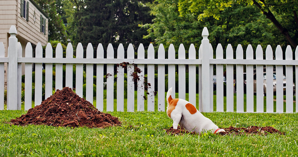 Собака роет ямы во дворе – как перевоспитать животное