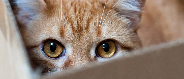 Кастрированный кот метит территорию