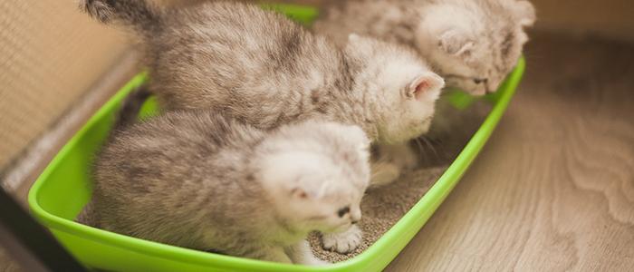 Котенок ест наполнитель для туалета – что делать