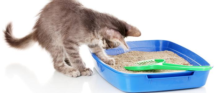 Котенок ест наполнитель для туалета