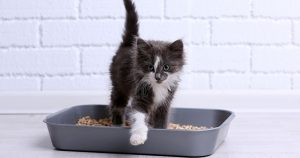 Котенок ест наполнитель для туалета – как отучить