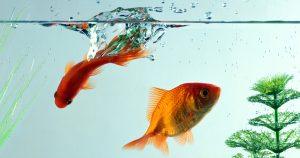 Можно ли рыбкам давать хлеб