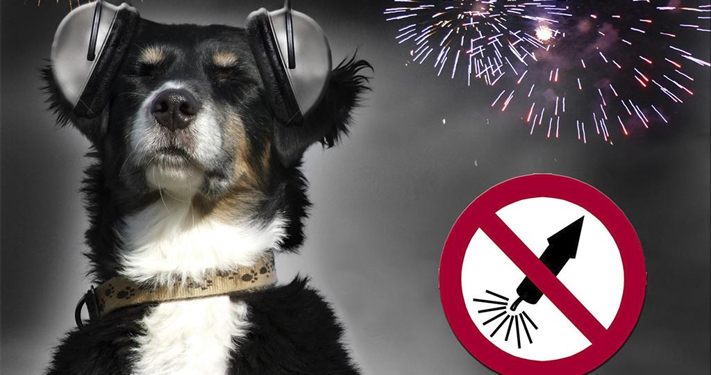 Собака боится выстрелов – почему и что делать