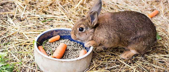 Чем кормить кроликов зимой дома