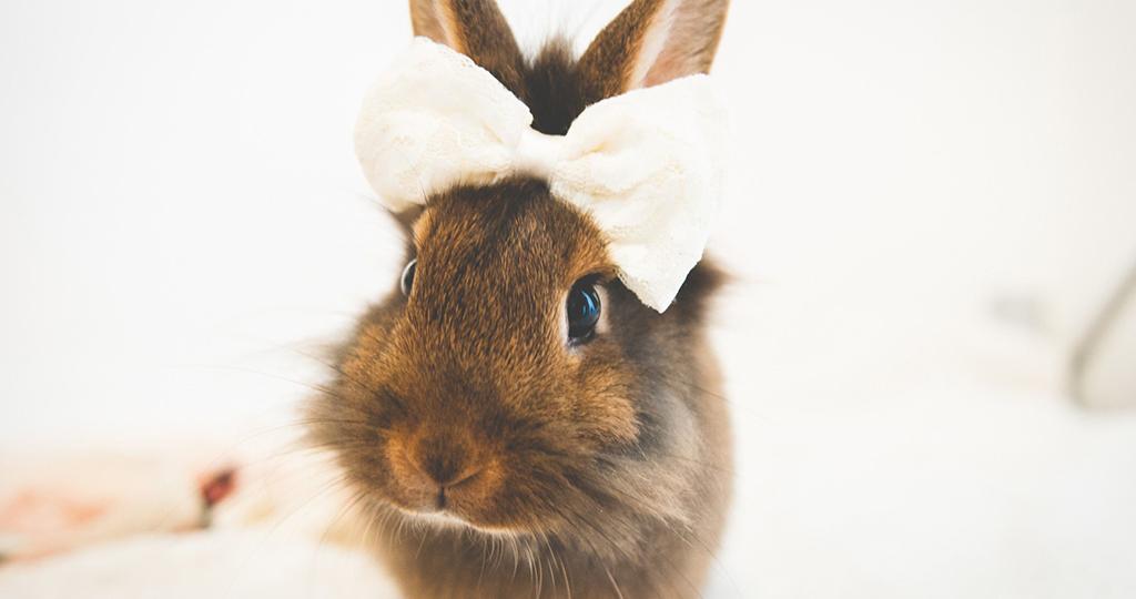 Чем кормить кроликов зимой – разрешенные и запрещенные продукты