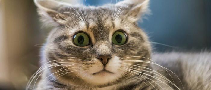 Что делать, если кот икает