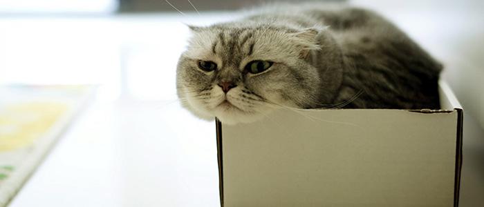 Кошка спит в коробке