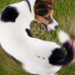 Собака грызет хвост – причины и как отучить