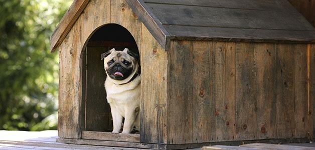 Почему собака не заходит в будку