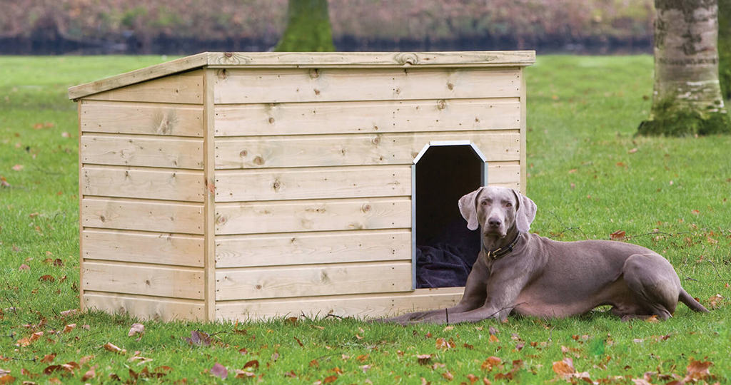 Собака не заходит в будку – что делать
