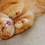 3 распространенные болезни кастрированных котов