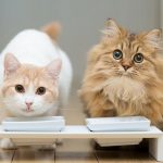 Кефир для кошек – польза и вред
