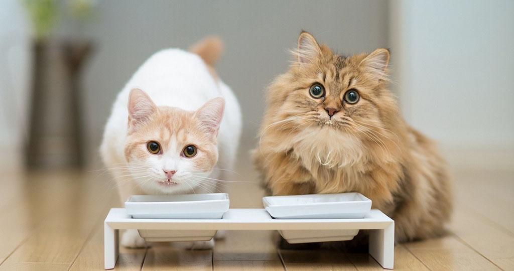 Можно ли котятам кефир? - Zhivomag