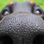 Собака шмыгает носом – причины и лечение