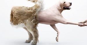 Собака сильно линяет – почему и что делать