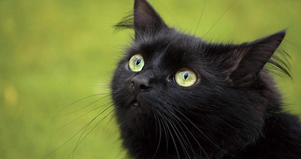 Активированный уголь для котов – вред или спасение