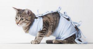 Бандаж для кошки после стерилизации – делаем своими руками