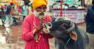 Почему корова – священное животное в Индии
