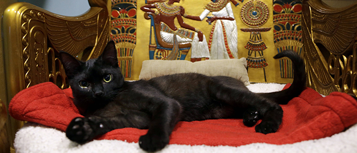 Священные кошки в Египте