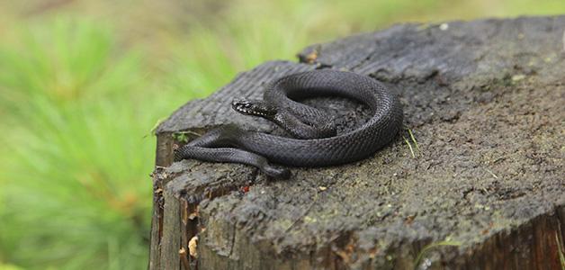 Что делать, если встретил змею