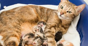 Что делать, если у вас дома рожает кошка