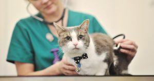 Триадит у кошек – причины, признаки и лечение