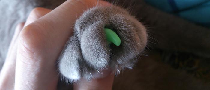 Удаление когтей у кошки