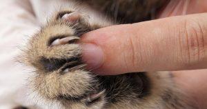 Удалять ли когти кошке – плюсы и минусы