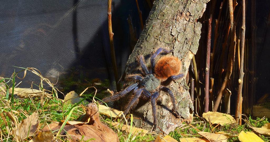 9 пауков, которых можно держать в домашних условиях